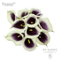 Wholesale Flower Distributor - Picasso
